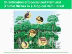 stratification of specialized plant and animal niches in a tropical rain forest