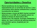 oportunidades y desafios1