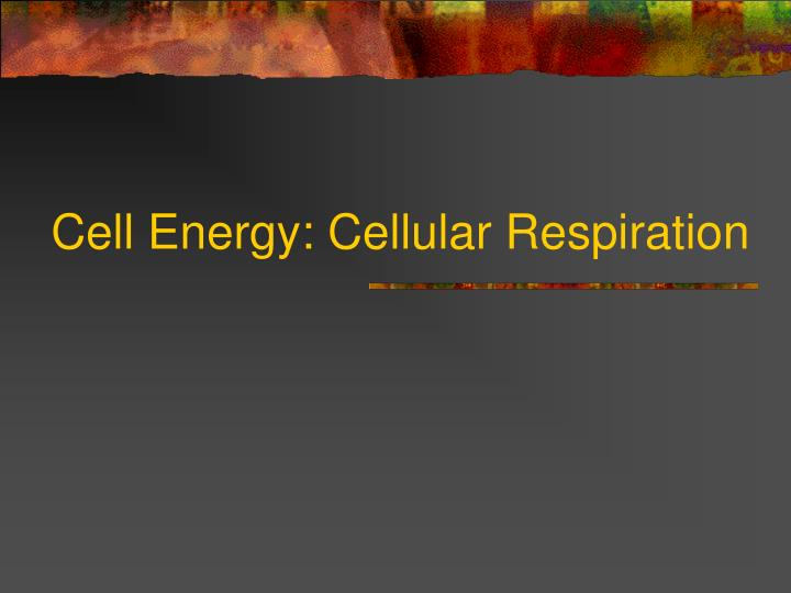 cell energy cellular respiration n.