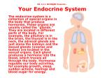 dr i i l mcsn e er presents your endocrine system