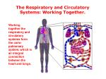 the respiratory and circulatory systems working together