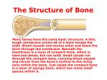 the structure of bone