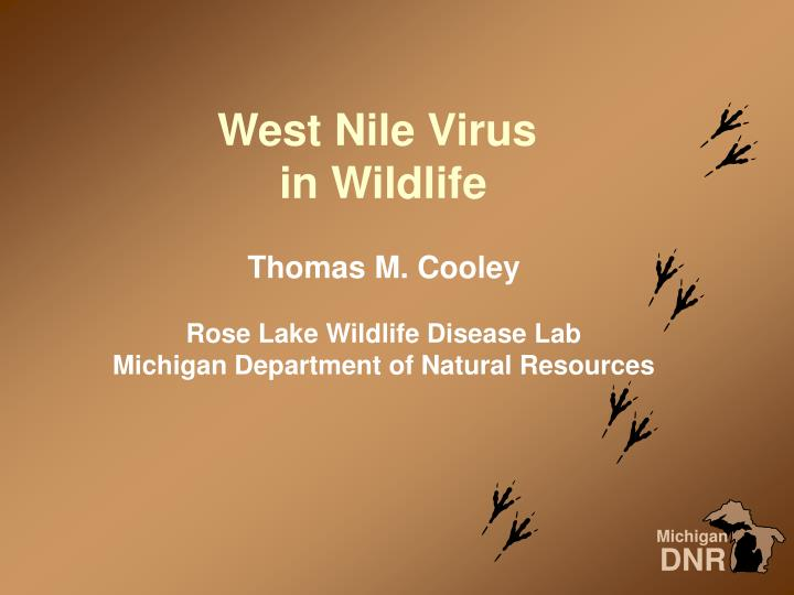 west nile virus in wildlife n.