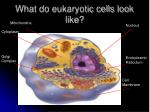 what do eukaryotic cells look like