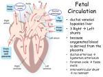 fetal circulation1