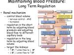 maintaining blood pressure long term regulation