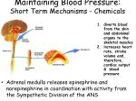 maintaining blood pressure short term mechanisms chemicals1