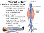 venous return valves