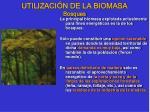 utilizaci n de la biomasa bosques