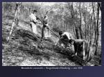 brennholz sammeln siegerl nder hauberg um 1910