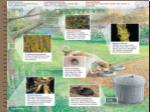complex interactions in ecosystem