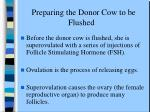 preparing the donor cow to be flushed