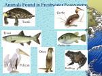 animals found in freshwater ecosystems
