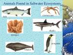 animals found in saltwater ecosystems