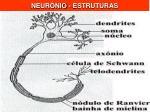 neur nio estruturas