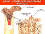 ossos canais vasculariza o e inerva o