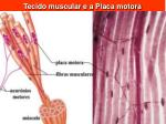 tecido muscular e a placa motora