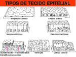 tipos de tecido epitelial1