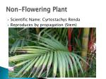 non flowering plant