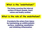 what is the endothelium