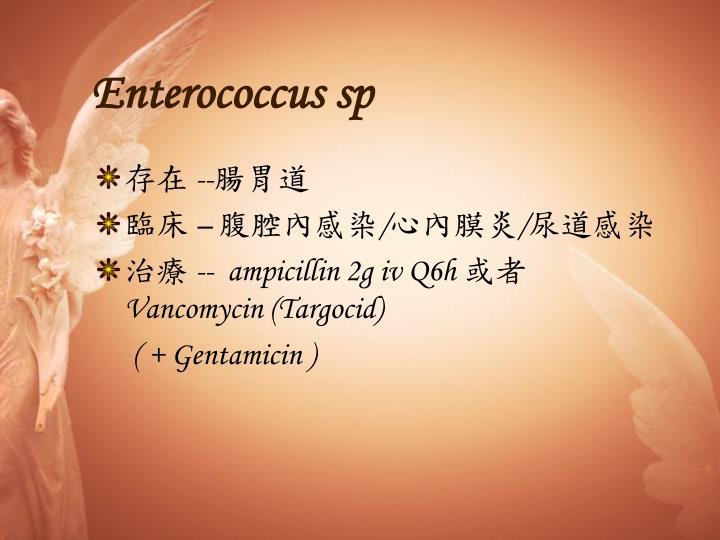 Enterococcus sp