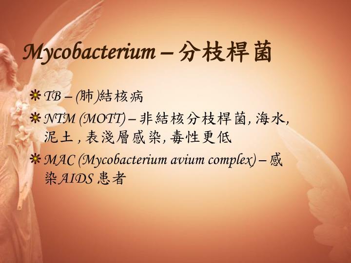 Mycobacterium –
