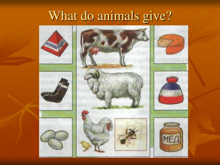 What do animals give?