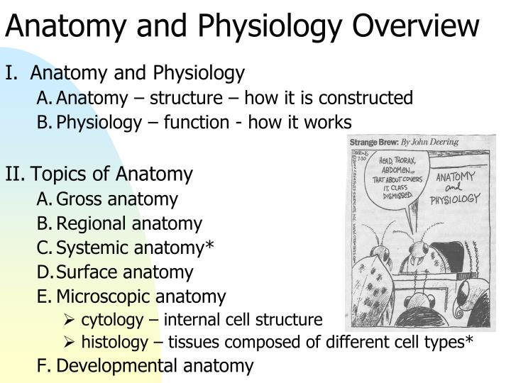 anatomy physiology cytology Microscopic anatomy is the study of minute anatomical structures assisted with microscopes, which includes histology (the study of the organization of tissues), and cytology (the study of cells.