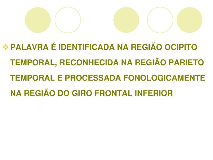 PALAVRA É IDENTIFICADA NA REGIÃO OCIPITO TEMPORAL, RECONHECIDA NA REGIÃO PARIETO TEMPORAL E PROCESSADA FONOLOGICAMENTE NA REGIÃO DO GIRO FRONTAL INFERIOR