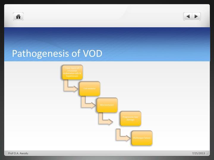 Pathogenesis of VOD