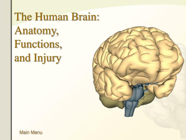 Ppt The Human Brain Anatomy Functions And Injury