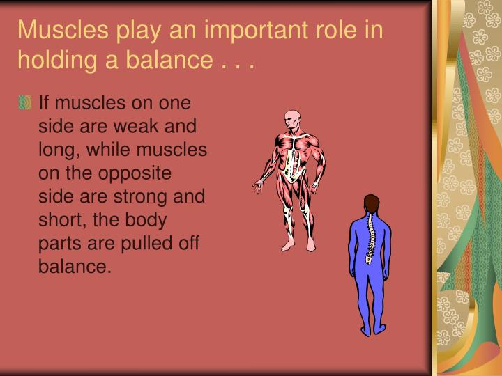 Muscles play an important role in holding a balance . . .