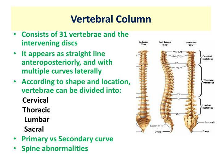 Ppt Anatomy Of The Vertebral Column Powerpoint Presentation Id