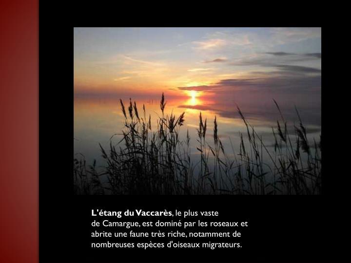 L'étang du Vaccarès