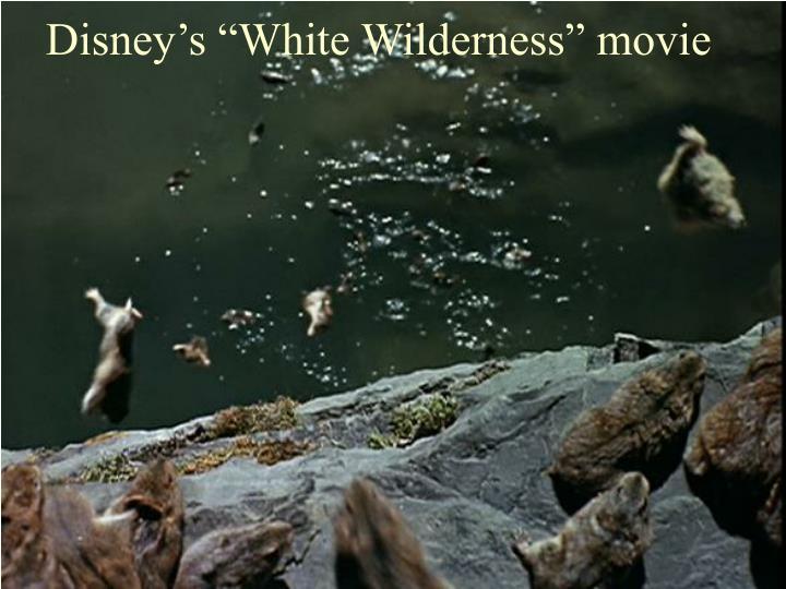 """Disney's """"White Wilderness"""" movie"""