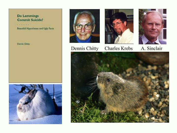 Dennis Chitty     Charles Krebs       A. Sinclair