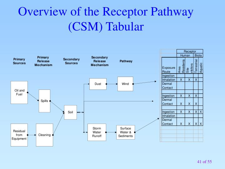 Overview of the Receptor Pathway