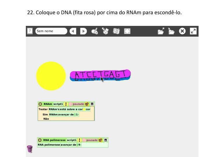 22. Coloque o DNA (fita rosa) por cima do RNAm para escondê-lo.