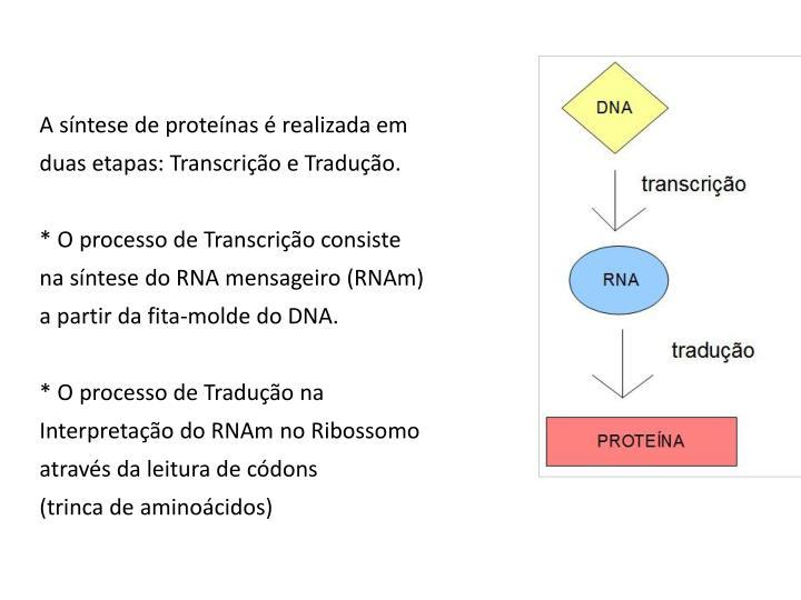 A síntese de proteínas é realizada em
