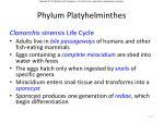 phylum platyhelminthes12