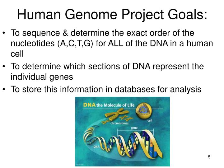 human genome project thesis statement The main goals of the human genome project were to provide a complete and accurate sequence of the 3 billion dna base pairs that make up the human genome and to find all of the estimated 20,000 to 25,000 human genes.