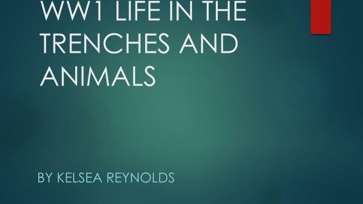ww1 life in the trenches and animals n.