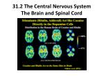 31 2 the central nervous system the brain and spinal cord5