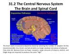 31 2 the central nervous system the brain and spinal cord6