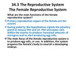 34 3 the reproductive system the female reproductive system