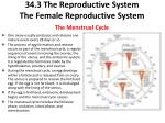 34 3 the reproductive system the female reproductive system the menstrual cycle