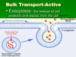 bulk transport active1