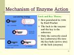 mechanism of enzyme action2