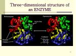 three dimensional structure of an enzyme