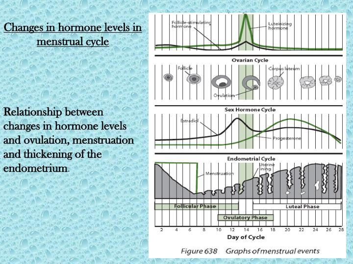 Changes in hormone levels in menstrual cycle